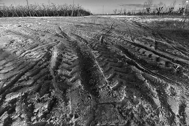 Tractor ruts in the mud