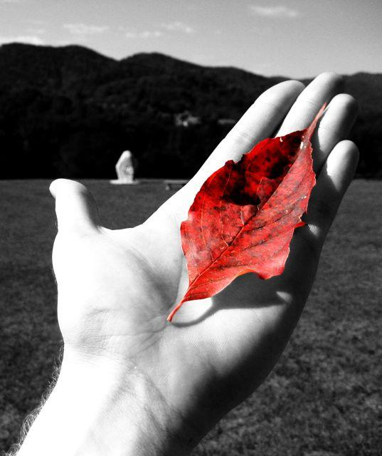 Holding a red leaf at The Monroe Institute