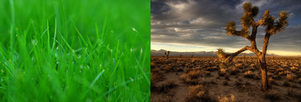 Grass and Desert Juxtaposition