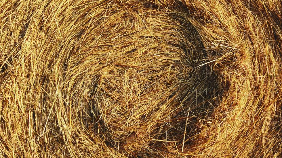 A swirl of hay.