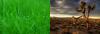 Grass and Desert Juxtaposition